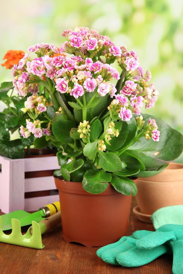 7 plantas de interior que purifican el aire Plantas limpiadoras de aire