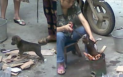 Un chiot roti vivant sur un marché de Chine ! 400_roasteddog1